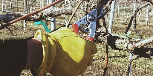 Grape Vine Pruning Workshop - Part I of II