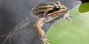 Frog Pond Workshop and Pollinator Planting Guide