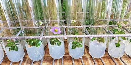 Как да отгледаме цвете в епруветка? Безплатни лекции с демонстрация tickets