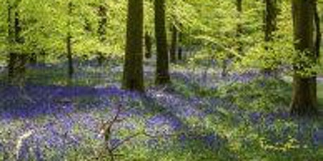 Coleford Area Walking Festival 14: Wenchford Bluebells tickets