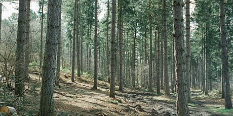 Forest Walk tickets