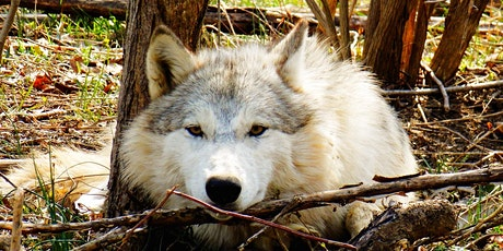 Red Wolf Sanctuary's HOWLoween Dinner tickets