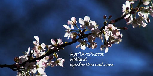 Photo Day Trip- Flowers of Central California