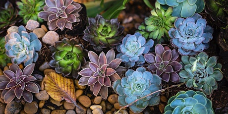 Succulent Swap, All ages, FREE tickets