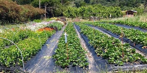 Forever Bloom Farm - Farm Tour – Pescadero, CA – 7/25/20
