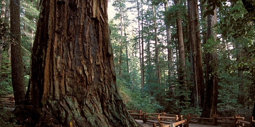 Listening Day in the Redwoods March 28, 2020
