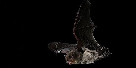 Op zoek naar vleermuizen in het Rivierenhof tickets