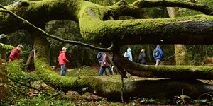Discover National Parks Fortnight - Ranger Walk:...