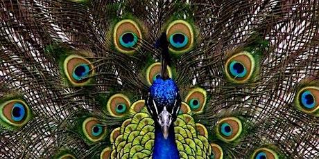 Peacock Paint'n'Sip with @BlaeberryRiverArt tickets