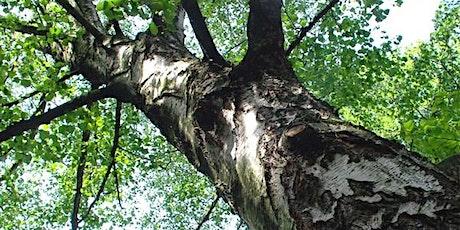 Keltische bomenwandeling in het Rivierenhof tickets