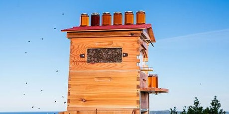Flow Hive Taster - An Introduction to Keeping Bees In Your Backyard tickets