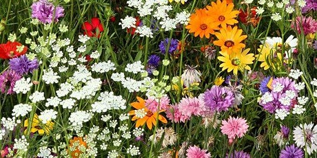 Summer Meadow Flower workshop tickets