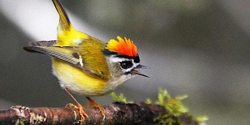 Audubon Birding Walk