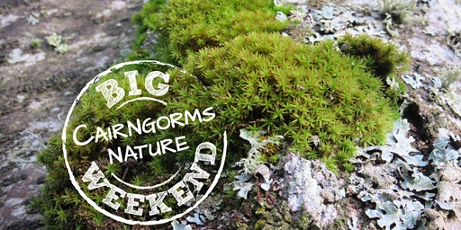 Miniature Worlds in the Cairngorms - mosses & lichens