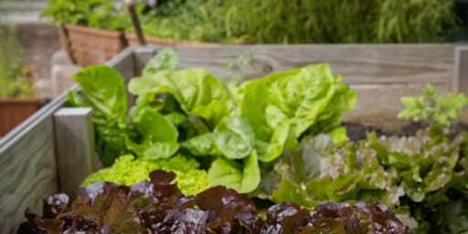 Raised Bed Gardening with Custom Foodscaping