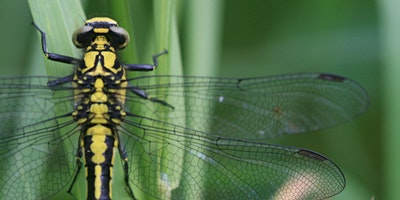 Nature Course: Dragonflies & Damselflies
