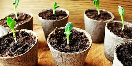School of Education: Plant Potting tickets