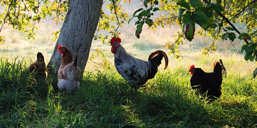 Raising Poultry at Home Seminar - Whitinsville 2020