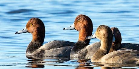 DNR Spring Birding Tour: St. Clair Flats State Wildlife Area tickets