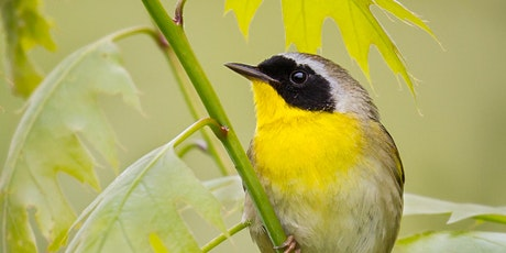 DNR Spring Birding Tour: Pte. Mouillee State Game Area tickets