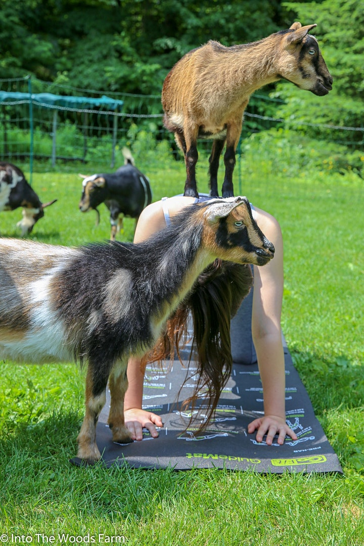 Goat Yoga At Side Stage Taproom Single Cut North image
