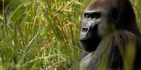 Gorillas of Gabon tickets