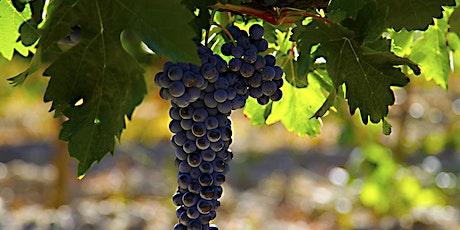 Iconic Spanish Wines biglietti
