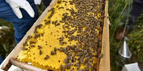 Basic Backyard Beekeeping tickets
