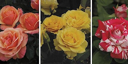 Rose Care Seminar