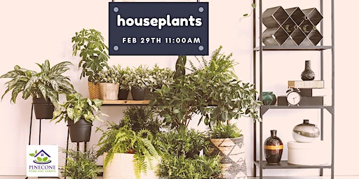 Indoor Plants 101: The Ultimate Guide to Super  Happy Houseplants