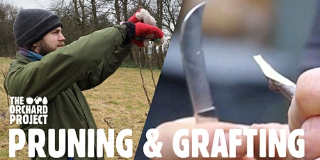 Pruning young fruit trees/Graft your own tree (Glasgow) tickets