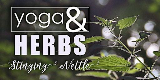 Yoga & Herbs: Stinging Nettle