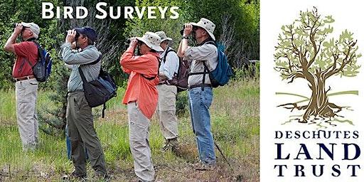Bird Surveyor Training: Willow Springs