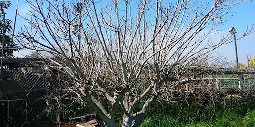 Tijuana River Valley Community Garden Pruning Workshops