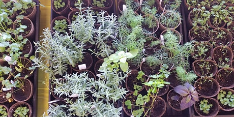 Growing, Using, and Preserving Herbs June 23, 2020  tickets