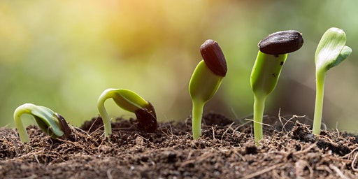 Start Growing from Seed - SS
