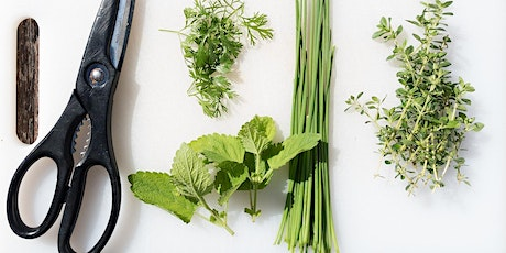 Harvesting and Preserving Herbs - Walk and Talk Class Series tickets