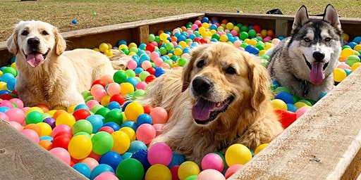 Doggy Play Park Open Day!