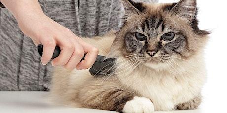 Initiatie huid en vacht: Kat tickets