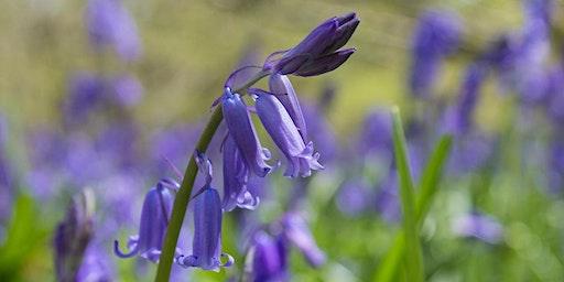 Spring Wildlife Wonder