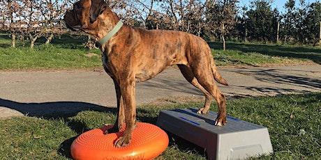 Massage, Body&balance een goede start voor pups tickets