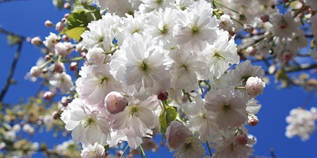 The Splendour of Ornamental Flowering Cherries CANCELLED tickets
