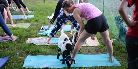 SUMMER SOLSTICE GOAT YOGA! - Sunday 6/20 | 6:15pm - 7:15pm | tickets