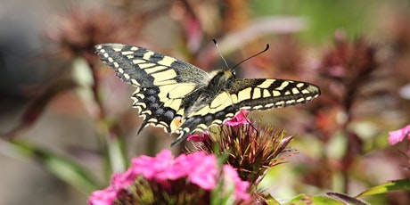 Dragonfly & Butterfly Safari at RSPB Strumpshaw Fen 2020 tickets