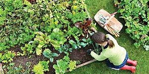 Gardening 101 for the Permian Basin