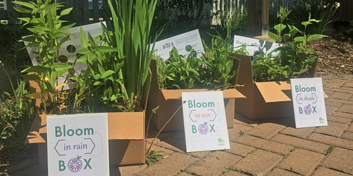 Bloom{in} Box | All-in-one Garden Kits