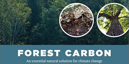 Forest Carbon: An essential natural solution to climate change.
