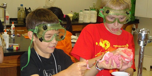 Silly Science - Summer Adventure Camp