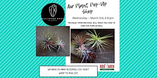 Blooming Air Plant (Tillandsia) POP-UP Shop