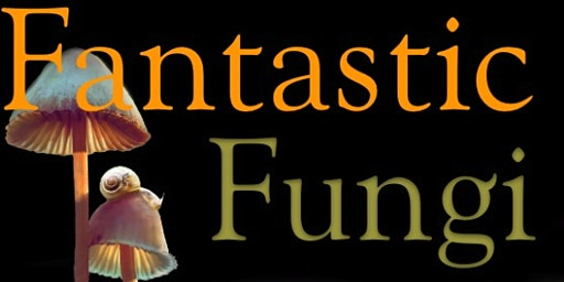 Fantastic Fungi Film Screening + Conversation